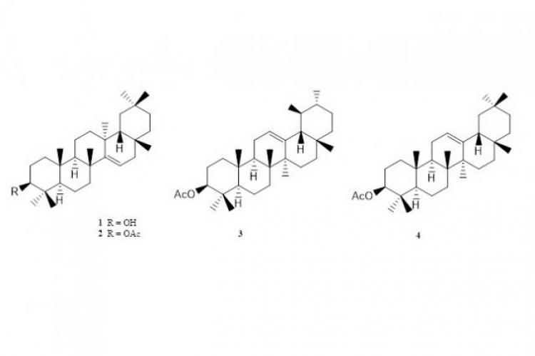 Chemical structures of taraxerol