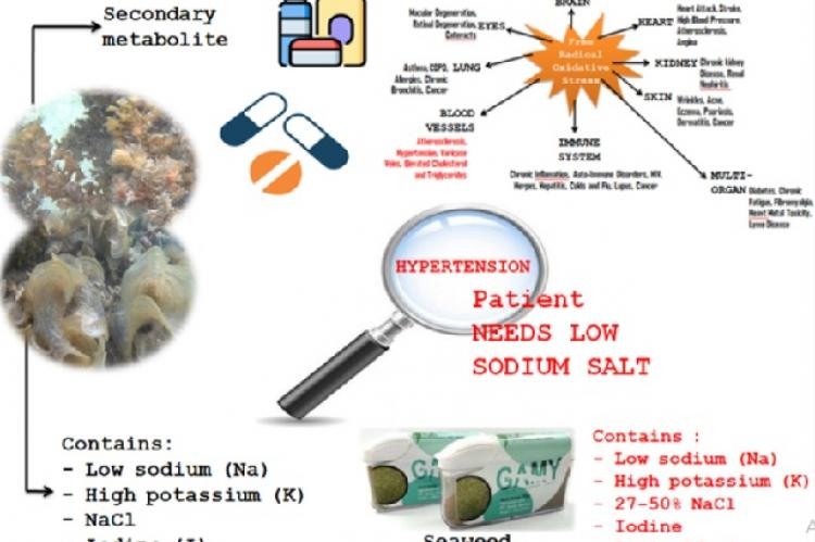 Graphical Abstract