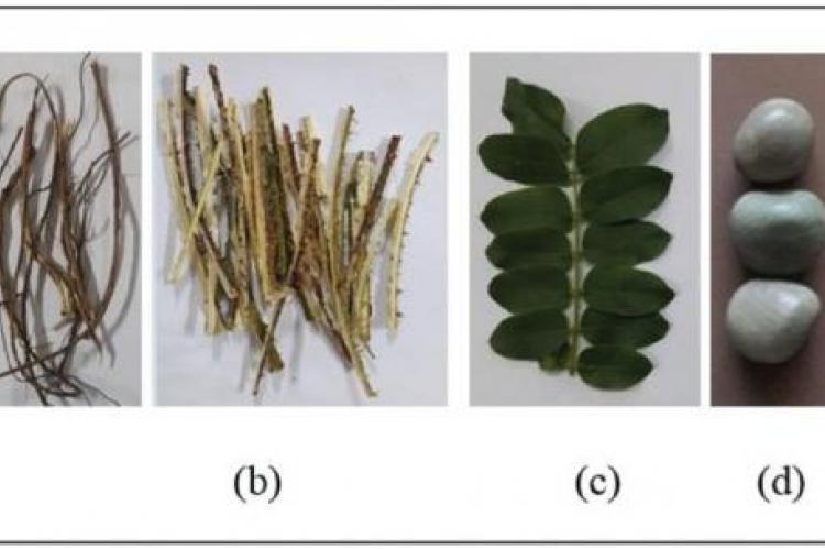 Caesalpinia bonduc (L.) Roxb (a) root; (b) stem; (c) leaf; (d) seed; (e) seed kernel