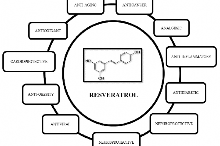 Biological activities and therapeutic potentials of resveratrol