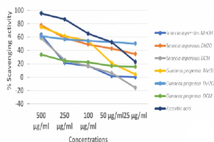 Antioxidant activity with DPPH assay