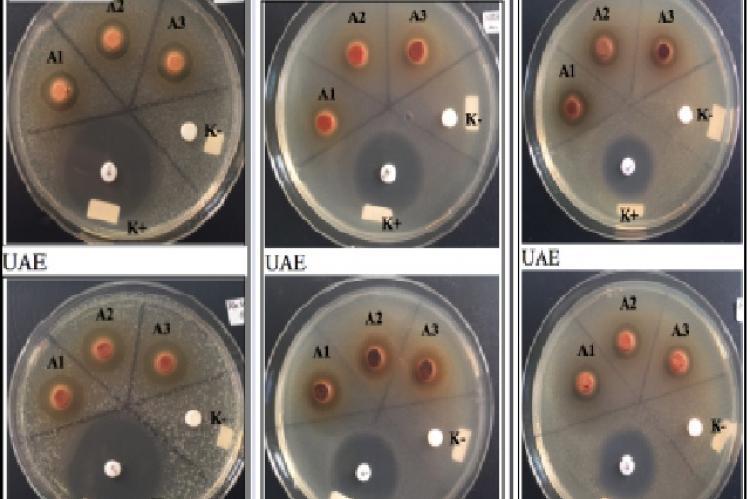 Paper disc diffusion method 1: Aeromonas hydrophila; 2: Edwardsiella ictaluri; 3: Flavobacterium columnare. * Description: measurement of diameter of the inhibition area includes paper disc diameter (6 mm)