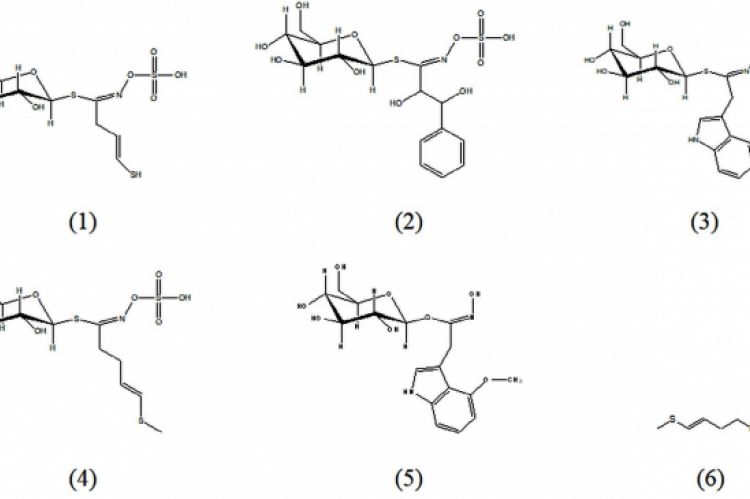 Chemical constituents found in R. sativus cultivars: sinigrin (1), 1,2-dihydroxy-2-phenylethylglucosinolate (2), 4 – hydroxyglucobrassicin (3), glucoraphasatin (4), 4-methoxyglucobrassicin (5), 4-methylthio-3-butenyl isothiocyanate (6).