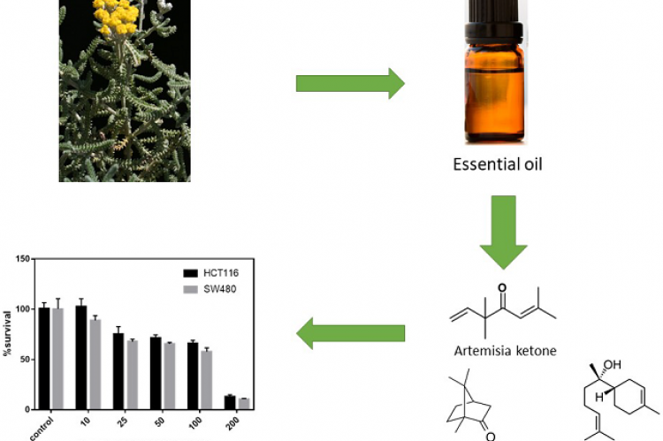 Chemical Composition and Biological Activity of the Essential Oil Isolated from the Leaves of Achillea fragrantissima Growing Wild in Yemen
