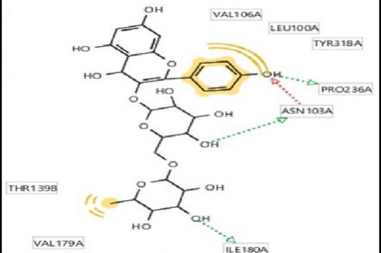 Kaempferol-3-O-Rutinoside