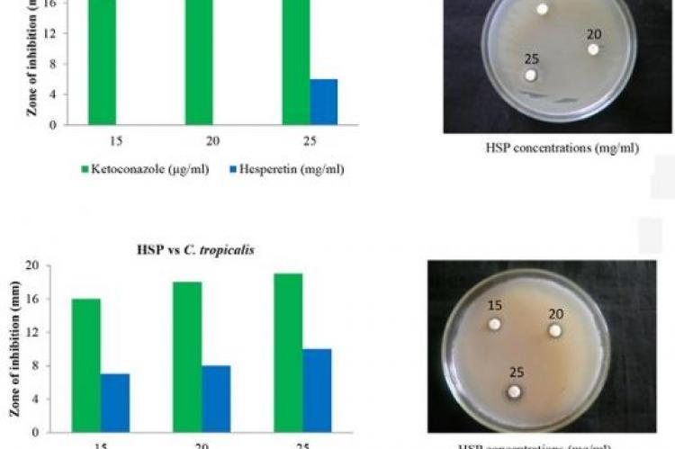 Antifungal effect of hesperetin
