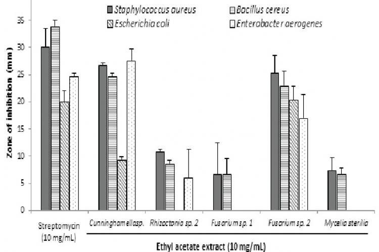 Antibacterial activity of the ethyl acetate extracts of Cunningamella sp., Rhizoctonia sp., Fusarium sp. 1, Fusarium sp. 2 and Mycelia sterilia using the Kirby-Bauer disk diffusion assay. The size of the disks is 5 mm. Data are shown as mean ± S.D. (n = 3).