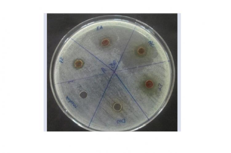 Antimicrobial assay by well diffusion on five flower extracts of T.populnea L. on C.albicans