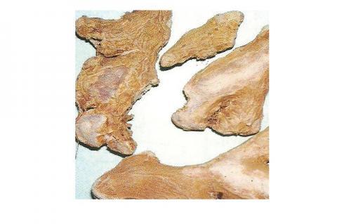 Dried rhizome of Zingiber officinale