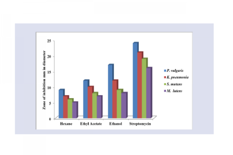 Antibacterial activity of different solvent extracts of leaves of H. hookerianum against human pathogens