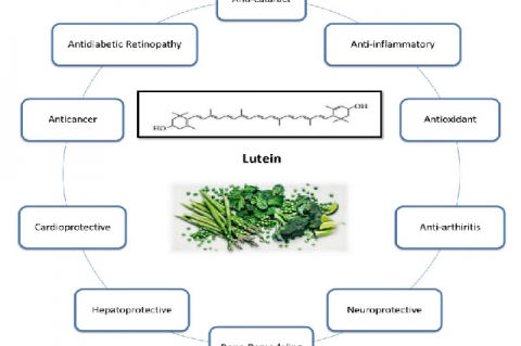 Biological activities and therapeutic potentials of lutein
