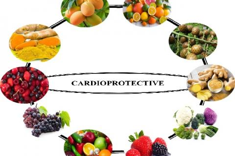 Source of natural products protective against chemotherapy-induced cardiotoxicity