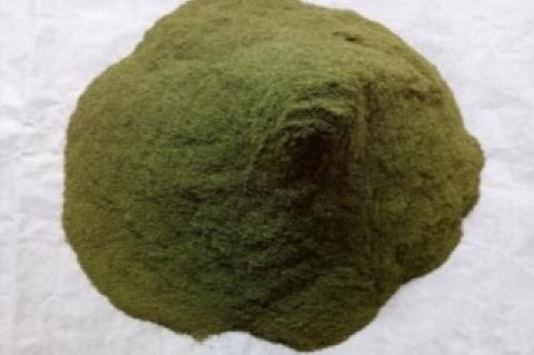 Kemuning leaf powder