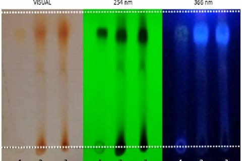 Apigenin bind on silica gel plate (1: apigenin standard, 2&3: ethanolic extract with hydrolyzed acid)