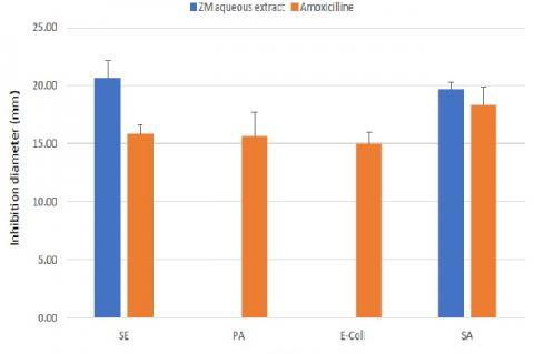 Inhibition diameters of ZM aqueous extract