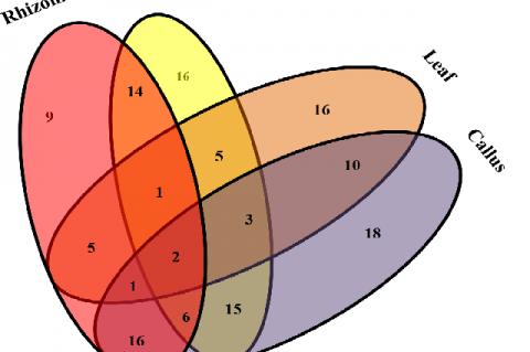 Venn diagram represented the unique and common compounds in different parts of R. emodi