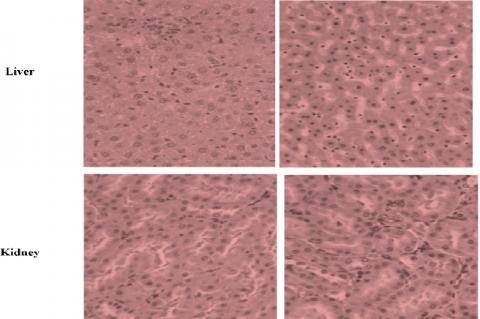 Light micrographs