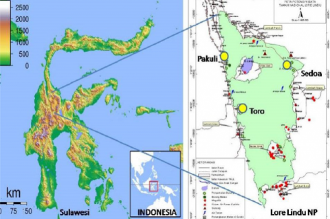 Map of Zingiberaceae Species Collected from Lore Lindu National Park, Central Sulawesi (Yellow Spots)