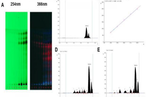 HPTLC chromatogram of Mahanine in 70% HA and alkaloidal extracts of Murraya koenigii