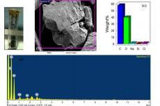 Represents elemental analysis in C. scariosus R. Br