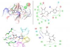 Docked complex of 1KDM and Chlorogenic acid and Docked complex of 1KDM and Trifluridine