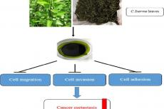 C. inerme leaves extract inhibited cell metastasis of A549 cells by suppressing cell migration, invasion, and adhesion