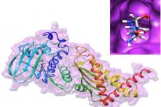 Natural compound (Allantoin) docked with bacterial drug target for DNA gyrase II (PDB ID: 5I3J) protein-ligand interactions A) 3D Pymol view B) 2D maestro view