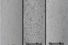 Cytotoxicity of test substance on L-6 cell line