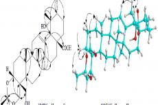 Important HMBC and NOESY correlations of compound 1